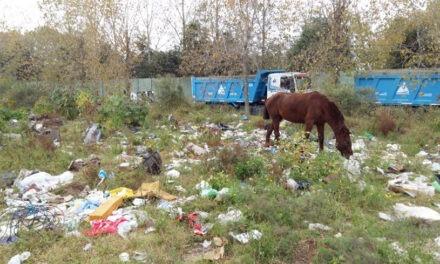 Limpian un importante basural en avenida 6 de Julio y Viola