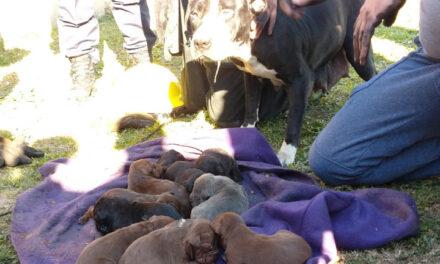 Heroica labor de Bomberos Voluntarios para salvar la vida de los perritos que se encontraban en el incendio intencional en el barrio El Destino