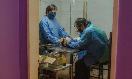 En tres meses, se realizaron más de 400 castraciones gratuitas
