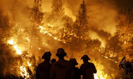 Fuego devastador: En solo tres meses, en Córdoba se quemaron 191.000 hectáreas