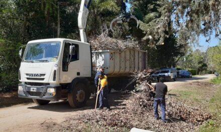 Importante operativo de recolección de ramas en el barrio Parque Natura