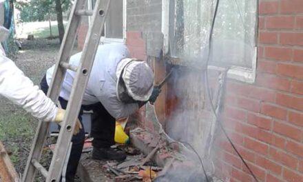 Continúa la recuperación de panales de abejas