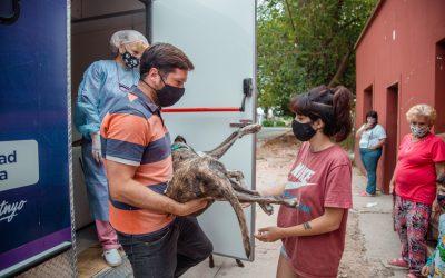 En marzo, el Municipio castró 460 mascotas de manera gratuita