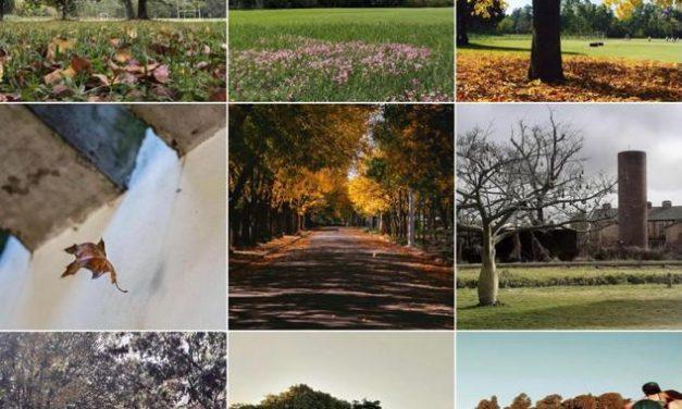 El Municipio invita a votar la fotografía más linda de la ciudad en otoño